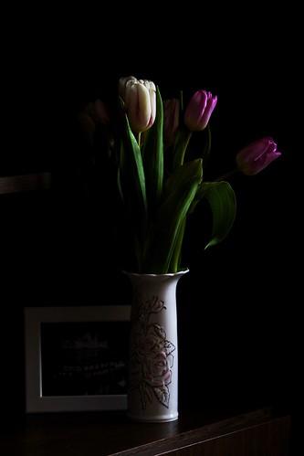 My tulips 🌷🌷🌷