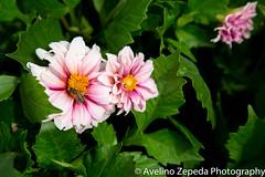 Bee bold, bee pink
