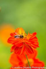 Bee bold, bee orange