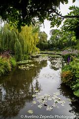Monet's Garden (From the bridge)