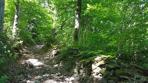 Monts du Lyonnais , Sous le Signal, randonnée pédestre