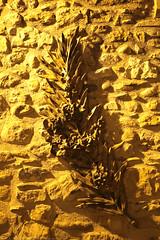 FR11 5871 Alet-les-Bains, Aude