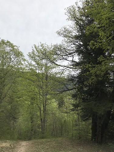 Loop through the woods