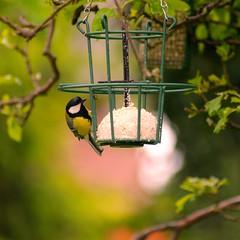 Wild Birds Feeding | May 18, 2020 | Schleswig-Holstein - Germany
