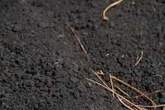 Rough Lava sands, Friends, Mount Etna, Catania, Sicily, 意大利