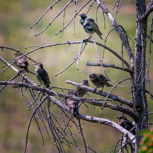 Bird convention...