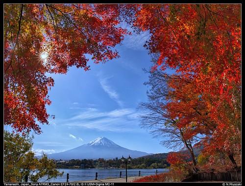 20181116_100917_Fujisan-Kawaguchiko_SA7R3_1073_stitche_s