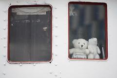 Bear message