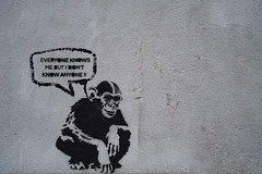 Everybody knows the monkey