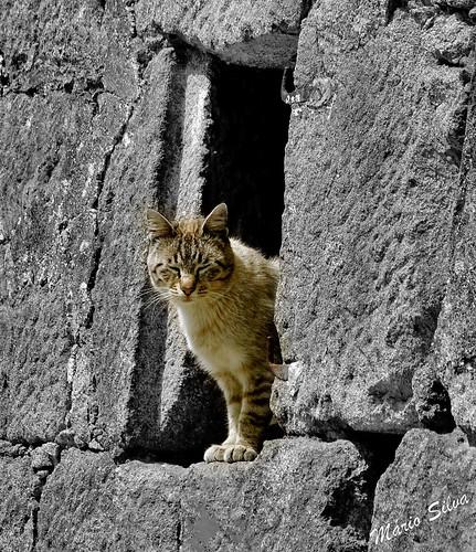 Gato à janela_CutOut