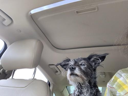 Yoda, the navigator