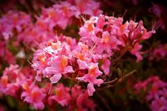 Pflanzen Blüten Blätter