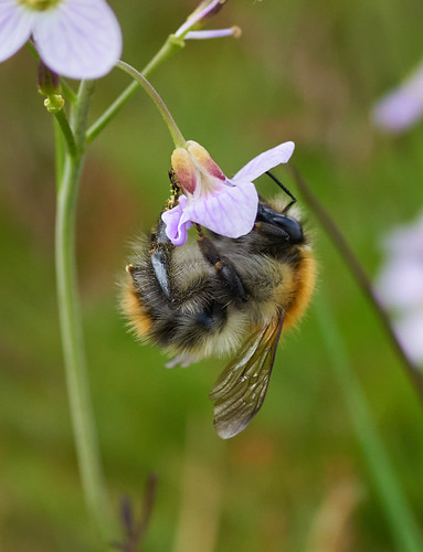World Bee Day.