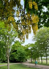 Victoria Park Widnes