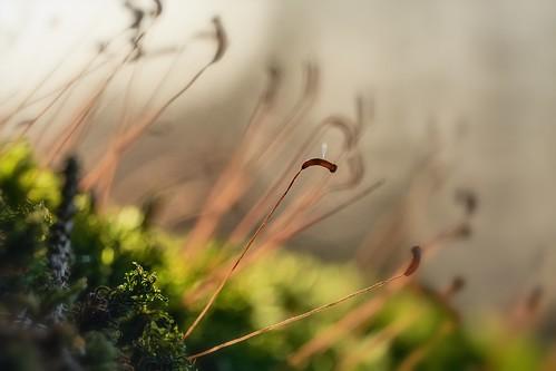 Nature Impression - Moss Seeds