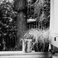 porch still life