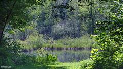 Le marais de Bourneville