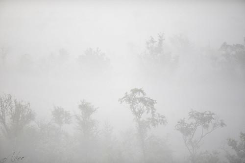 Moor in the mist