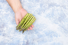 Fresh Asparagus pile in the hand above blue background with copy space