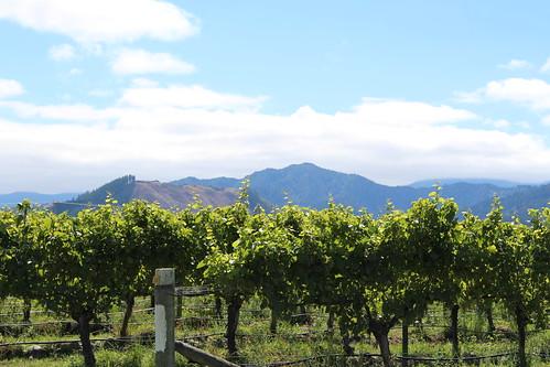 Huia Vineyard/ winery, Blenheim wine tour