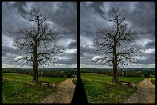 Cunnersdorfer Linde, Kalkhöhe 3-D / Kreuzblick / Stereoskopie