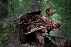 Лесные друзья / Forest guys