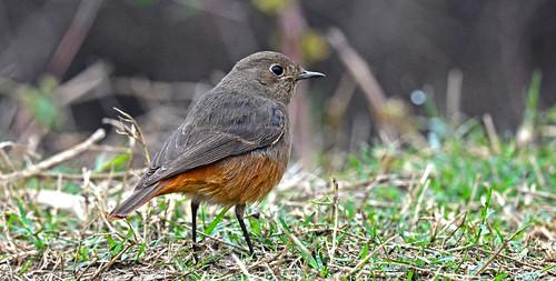 Birds of Bharatpur Sanctuary DSC_9841