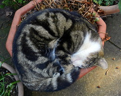 Edward sleeping on a plant pot.