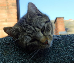 Charles on the extension roof.