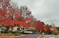 Stirling. In the Adelaide Hills. The Main Street in autumn.