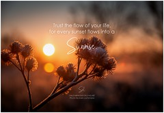 Symphony of Love Trust the flow of your life, for every sunset flows into a sunrise