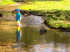 Stepping stones, Sherbrook Valley, Brocton, England