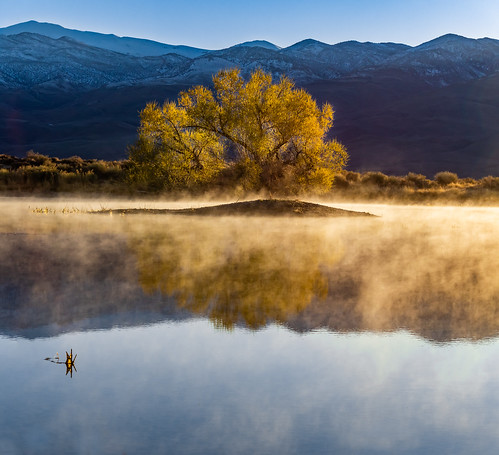 Mist On The Water. Farmers Pond, Eastern Sierra.