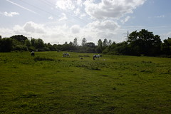 Horses in the Park