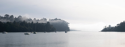 A Misty Morning in Greenhithe Auckland New Zealand