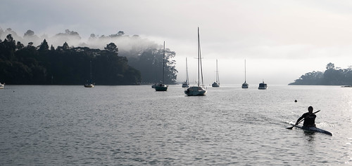 A Misty Morning in Greenhithe, Auckland, New Zealand
