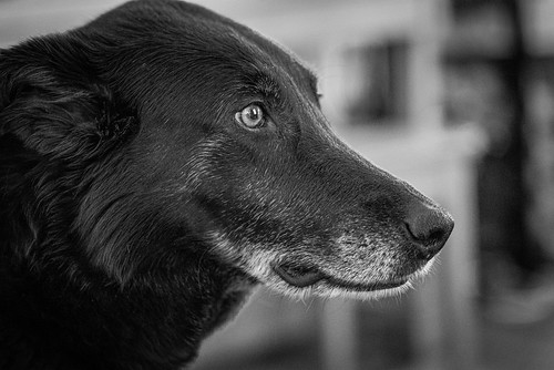 Best Dog Ever (2)