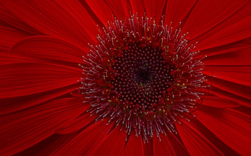 Red Spring 2020 DSC_0971