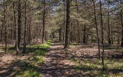 Forêt domaniale de l'Espinouse