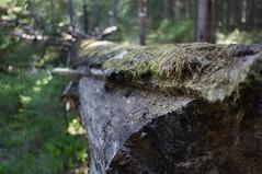 Road trip to Färnebofjärden