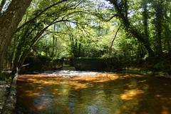 rivière dans la forêt - Photo of Masseilles