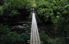 pontes de arame