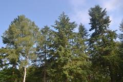 Zicht op bomen in Besthmenerberg (136FJAKA_3762)