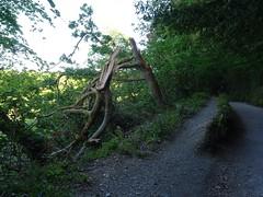 Broken tree, brighter path