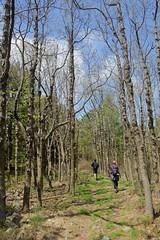 AT_Lehigh_Trees