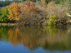 Adelaide Hills. Reflections in the lake in the Mount Lofty Botanic Gardens in mid autumn.