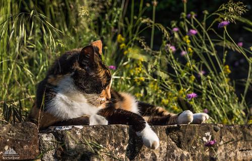 Simply Sunbathing ☼