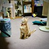 Photo:She sits and looks up #cat #猫 #ネコ #ねこ #Gatocallejero #Chaterrant #도둑고양이 #Katze #chat #gatto #gato #feles #кошка #KAT #gato #고양이 #kočka #kass #муур #pisică #千葉県 #Chibaken #柏市 #柏 #Kashiwa #Kashiwashi #ivvaDOTinfo By ivva