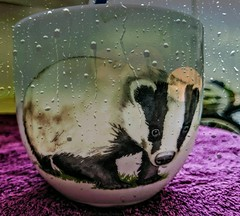 Badger under the weather