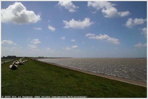 Waddenzee | Wadden Sea | Ваттовое море